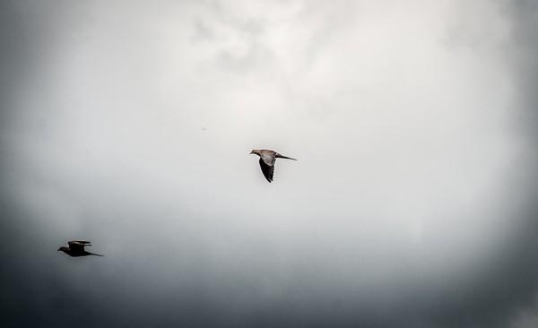 Drew Dove Hunt-13